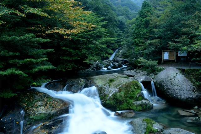 yakushima1_compressed