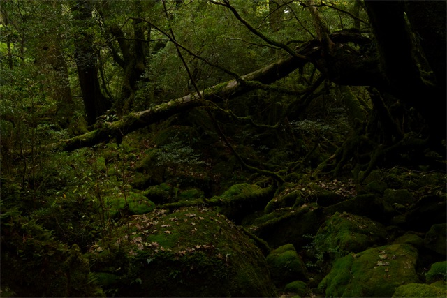 yakushima3_compressed